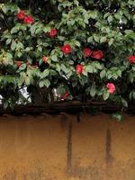 土塀と椿部分.jpg
